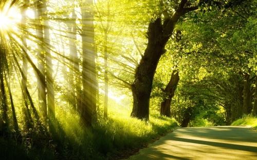 Lght through the trees