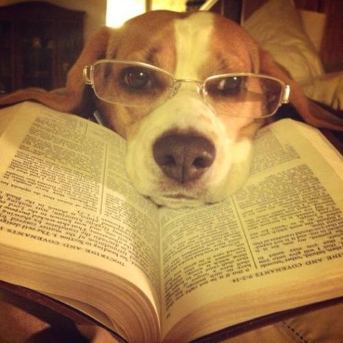 Reading Beagle