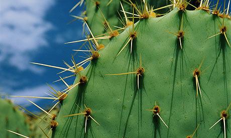 Cactus-006
